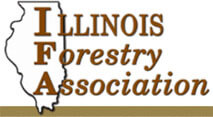 Sell Timber in IL